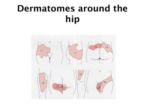 right hip flexor wikipedia deutsche post