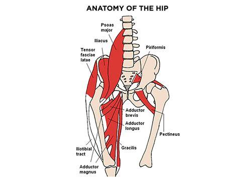 role of the hip flexors