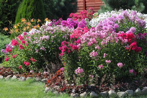 Rosen Im Lehmboden Pflanzen
