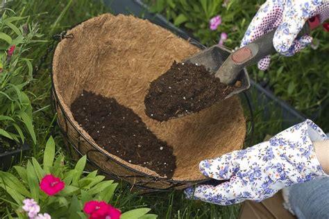 Rosen Pflanzen Mit Torf