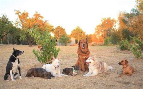 Sacramento Dog Boarding Training