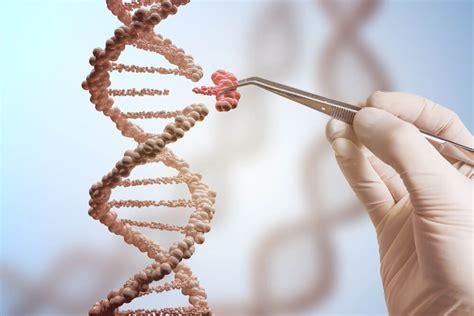 sample of genetic engineering genetic engineering biologymad - Genetic Engineer Sample Resume