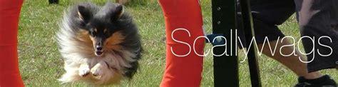 Scallywags Dog Training