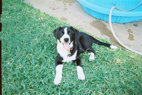 Search And Rescue Dog Training Austin Texas
