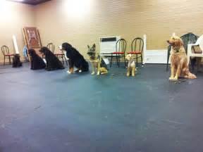 Seattle Dog Training School