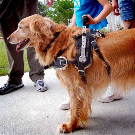 Service Dog Training For Balance