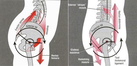 short hip flexor posterior tilt of scapula muscles anterior