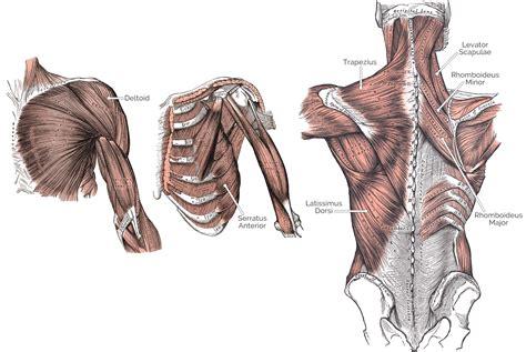 shoulder flexion muscles tablets under $100