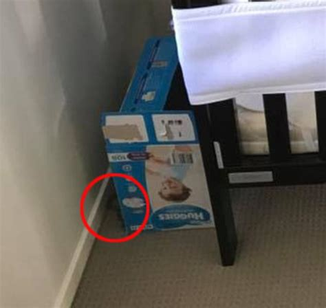 Court Attire Qld Snake Found Hiding In Qld Next To Young Babys Cot Daily