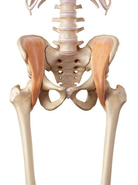 sore hip flexor muscles palpation meanings of names