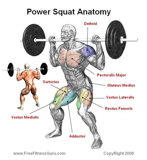 sore hip muscle when doing squats what muscles do they work