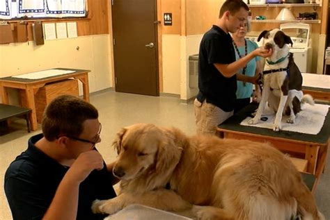 Special Needs Dog Training