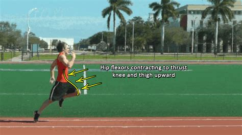 sprinting hip flexor flexibility exercises examples of irony