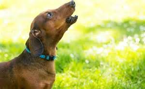 stop dog barking while away