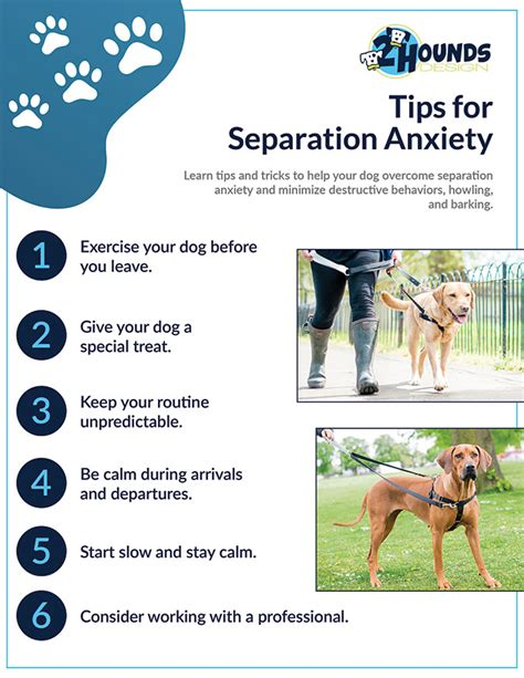 stop separation anxiety in dogs