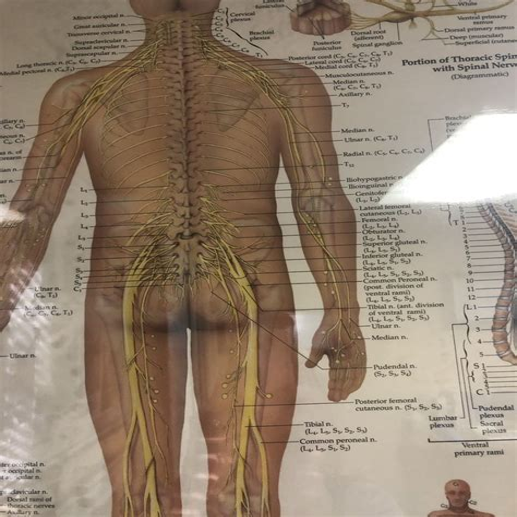 stretch hip flexors while standing tumblr transparents cute