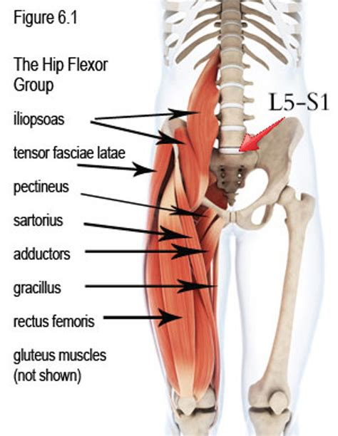 stretches for tight hip flexors and hamstrings anatomy diagram