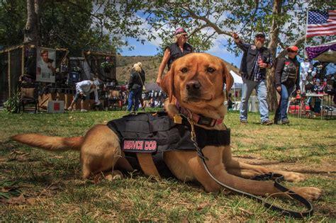 Tackett Dog Training
