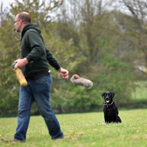 Take The Lead Dog Training
