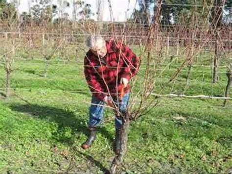 The Complete Grape Growing System Kerr Farm Wine.