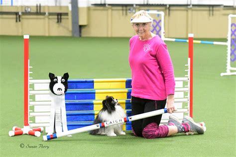 The Dog Training Club Sedgley