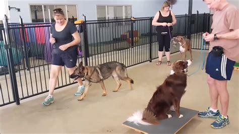 The Dogfather Dog Training