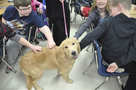 Therapy Dog Brings Joy Comfort To Patients