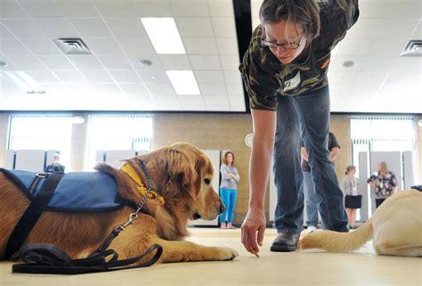 Therapy Dog Training Albuquerque