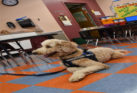 Therapy Dog Training Ri