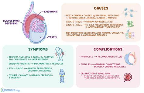 tight hip flexor testicals epididymitis orchitis causes