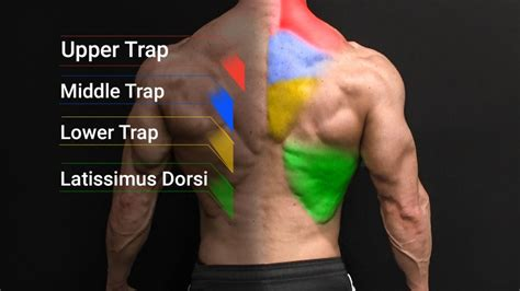 tight middle back muscles stretches for lower