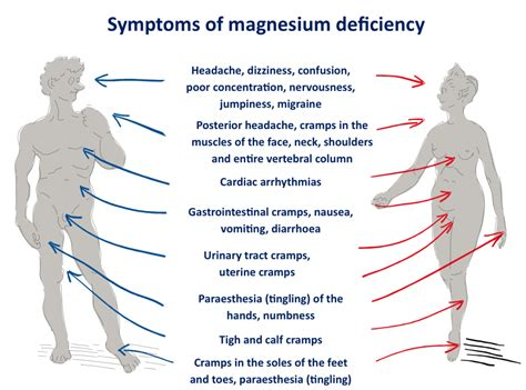 tight muscles all over body magnesium levels