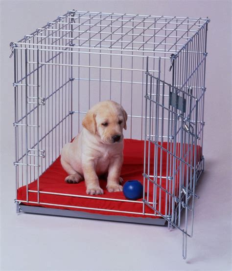 train dog in crate