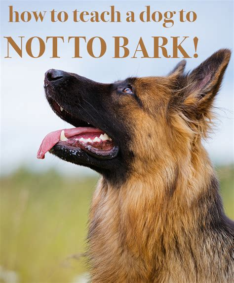 train your dog to not bark