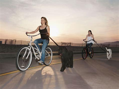 Train Dog Run Bike