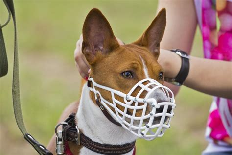 training dog to wear muzzle