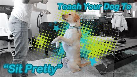 Training A Dog To Sit Pretty