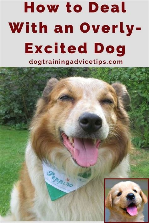Training An Older Dog Not To Bark