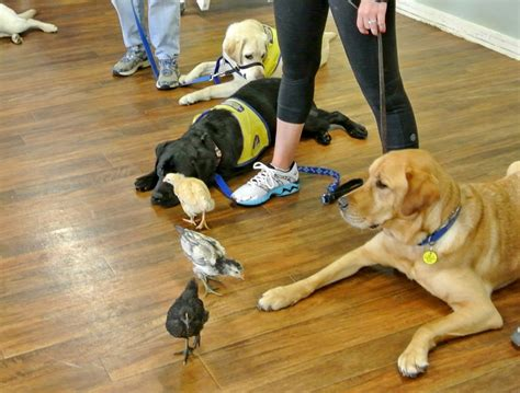 Training For Service Dog Trainers