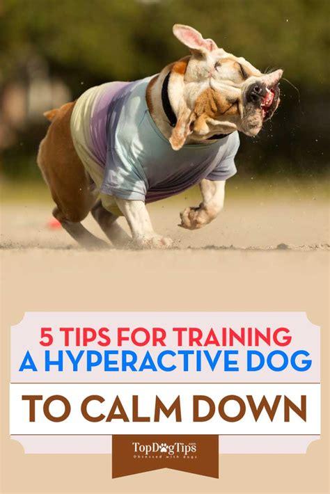 Training Hyperactive Dog