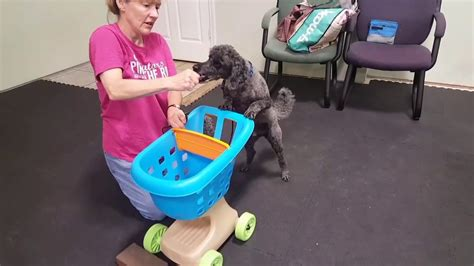 Tricky Dogs At Canine Country Academy