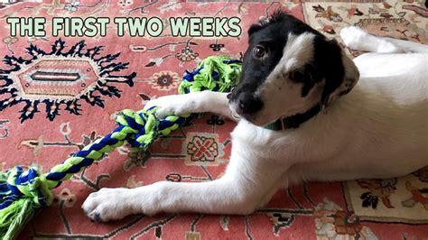 Two Week Shut Down Dog Training