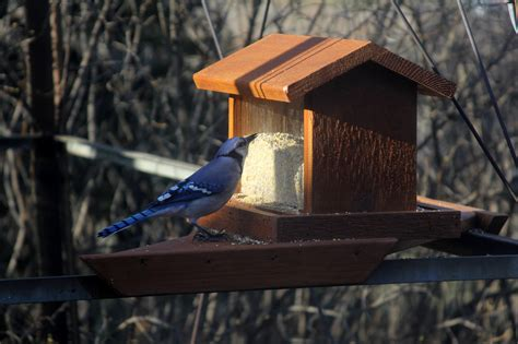 types of bird feeders