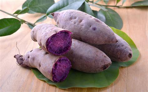 Ube Plant Philippines