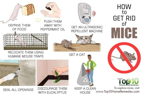 Ways To Get Rid Of Mice In House