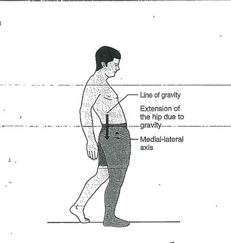 weak hip flexor gait patterns and deviations