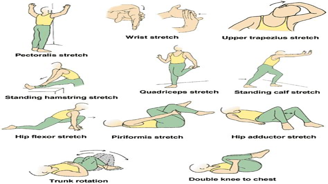 what are good hip flexor exercises for seniors