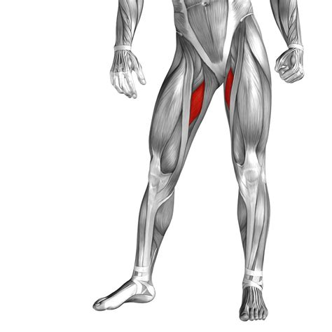 what are hip flexors and abductors and adductors