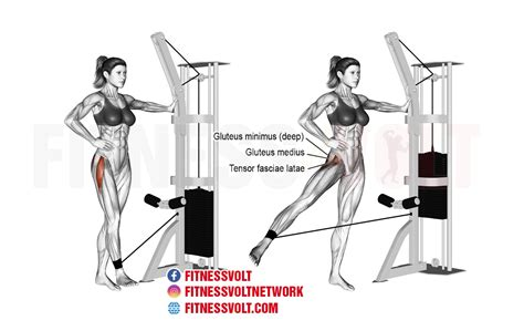 what are hip flexors and abductors legs exercise
