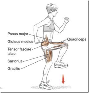 what are the main muscles used in hip flexion rom